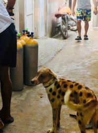 Spotty Dog ,El Nido ,Palawan ,Phillipines ,S.E. Asia