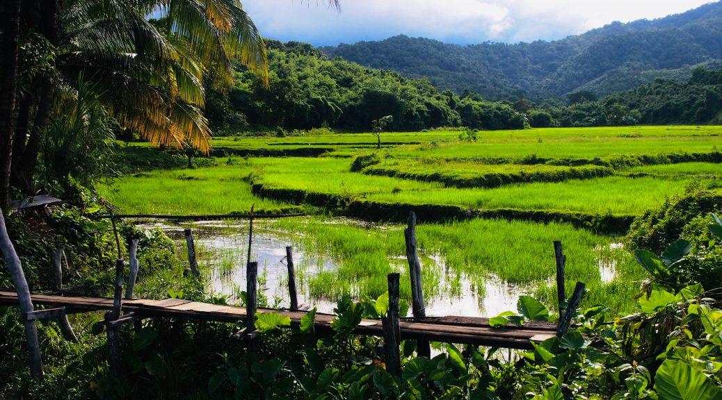 Rice Fields,El Nido ,Palawan , Phillipines,S.E Asia