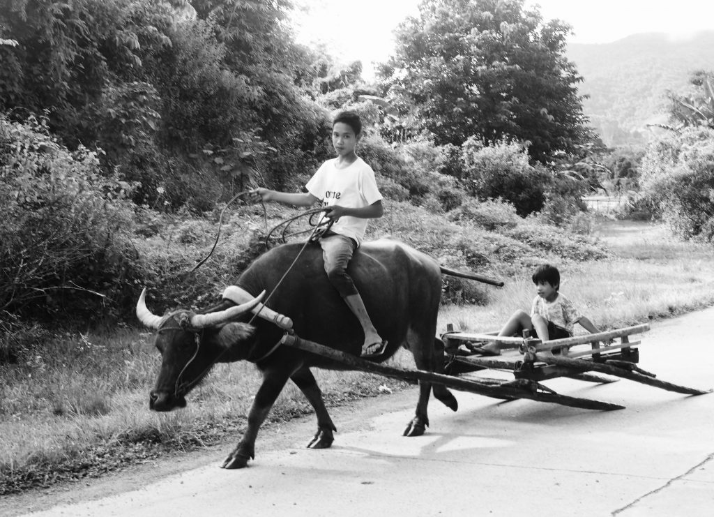 Boy riding a Buffalo,Palawan ,Phillipines ,S.E. Asia