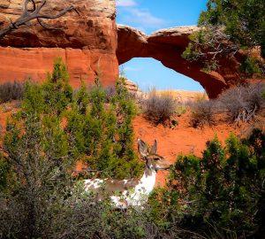 Local Fauna- Arches National Park- Utah